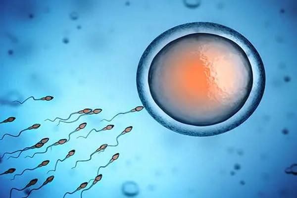 试管婴儿怎样提高胚胎移植成功率?